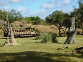 Kilimanjaro Safari is one of Animal Kingdom's major attractions