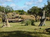 Kilimanjaro Safari is one of Animal Kingdom's major attractions