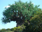 Tree of Life, the centerpiece of the park