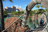 Rope bridge over a shark lagoon