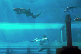 Shark tunnel slide, different angle