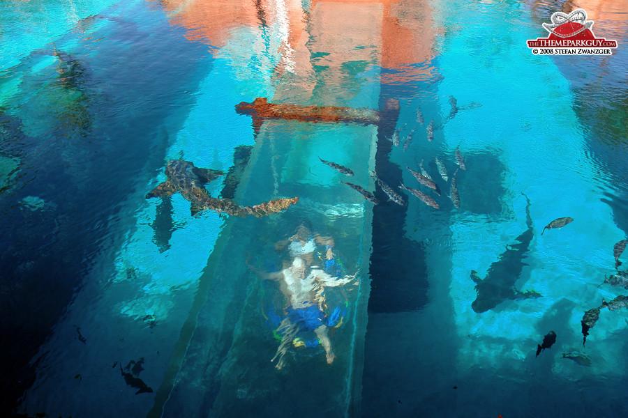 shark tunnel slide underwater water atlantis s52 underwater