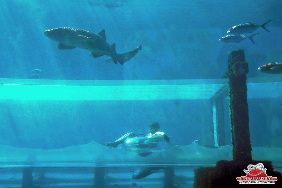 underwater water slide. Beautiful Slide Shark Tunnel Slide Different Angle On Underwater Water Slide I