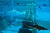 Sliders and sharks