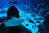 Massive fish tank