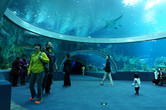 Aquariums plentiful