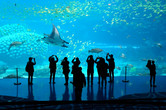 Manta rays in Zhuhai