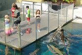 Passionately hungry crocs