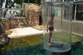 Visitor approaching croc pool