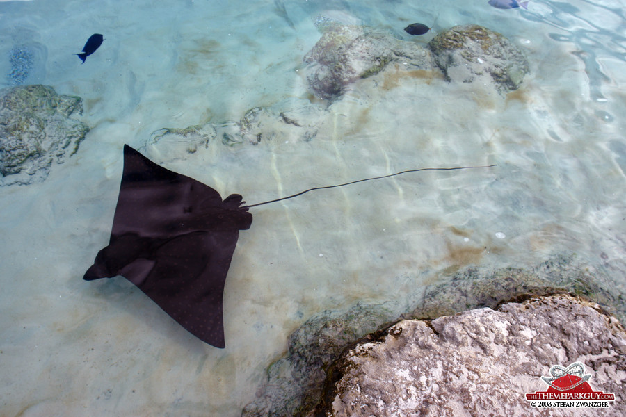 Rays that can be harrassed