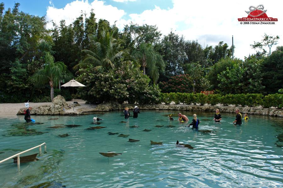 The stingray pool
