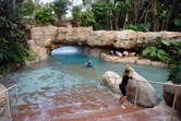 Discovery Cove scenery