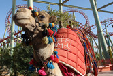 Coaster camel