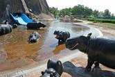 Hippos in the emirate of Umm al-Quain