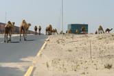 Legends Dubailand office
