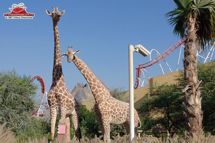 Giraffes at the sales center parking lot