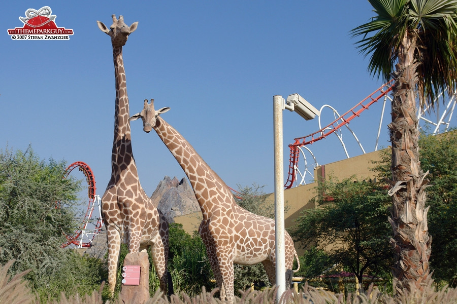 Giraffes at the sales center parking lot