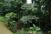 Dense tropical jungle