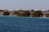 Mangroves on Yas Island