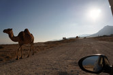 Camel-infested roads
