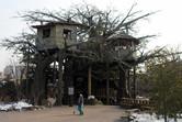 Happy Valley Beijing tree house