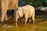 Amazing animatronic elephant baby!