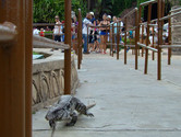 Nonpaying reptile visitor