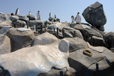 Rock work and penguins