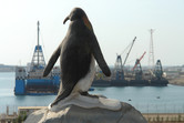 Penguins in Ras al-Khaimah