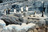 Penguins up close