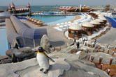 Wave pool with penguins