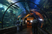 Shark tank tunnel in Mandalay Bay