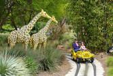 Children's safari