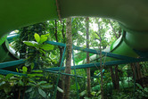 Slides through the jungle