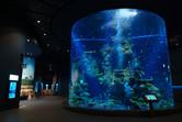 Inside Southeast Asia Aquarium