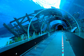 Tunnel through the shark pool