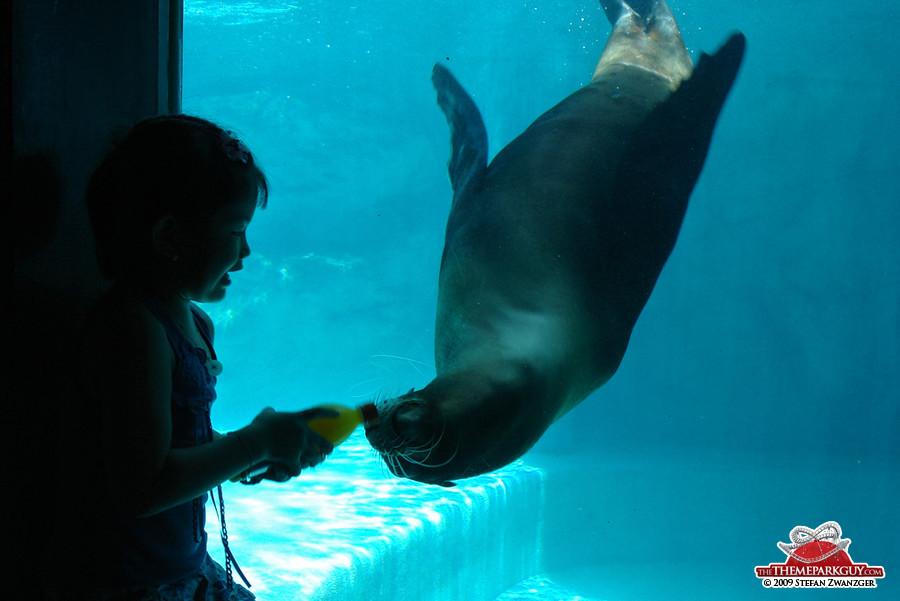 The sea lion orange juice dance