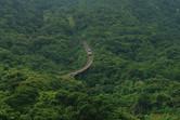 Massive funicular railway racing upwards through the jungle