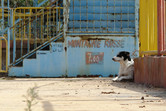 Lethargic Sindibad watchdog