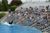 SeaWorld's signature killer whale show