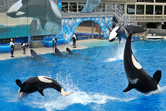 Six killer whales!