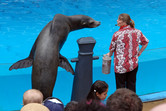 Sea lion in talks with the trainer
