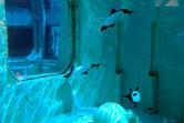 SeaWorld features some wonderful aquariums