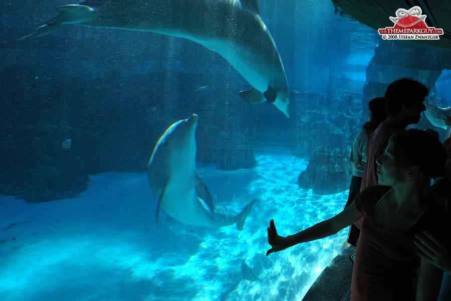 Seaworld Orlando Photos By The Theme Park Guy