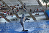 SeaWorld Orlando killer whale show