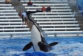 Amazing stunts!