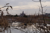 The swamplands and the Shanghai Disney castle
